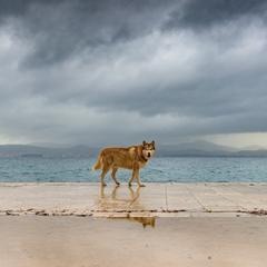 Husky, walking a coastal pavement under dark skies