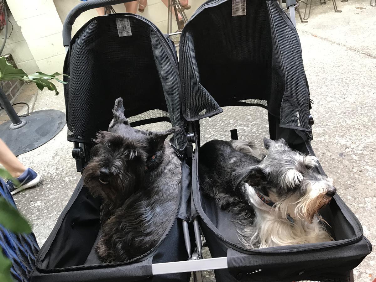 Pups life