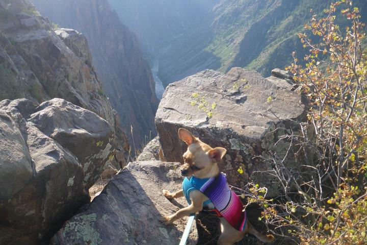 Pet Friendly Black Canyon of the Gunnison National Park