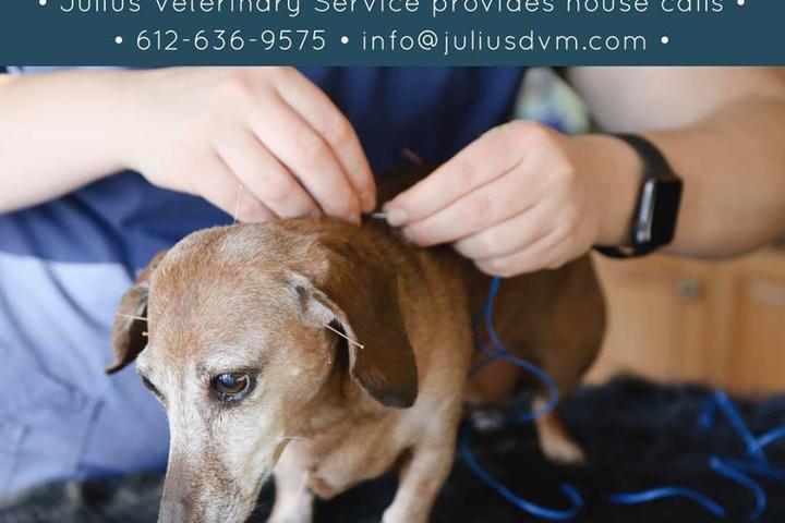 Pet Friendly Julius Rehabilitation & Integrative Veterinary Services