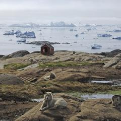 Artic dogs by the sea