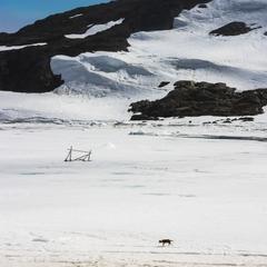 Dog on an ice bay
