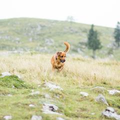 Dog walking in Slovenia