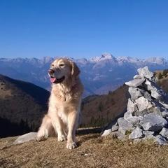 Top dog on a mountain.