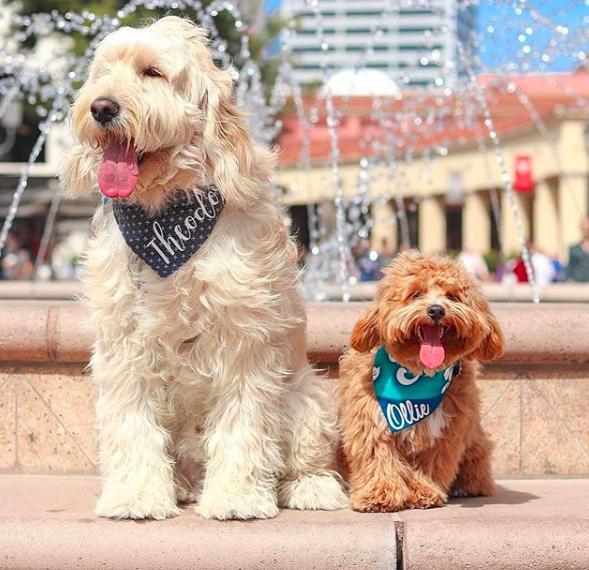 Dogs at Fountain