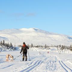 Pet friendly ski trips
