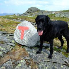 Dog trek on the mountain of Norway