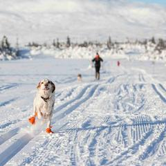 Pet friendly winter destinations