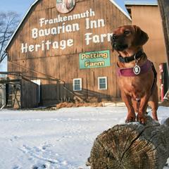 Dog Outside of a Petting Farm