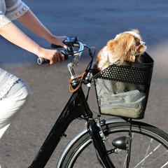 City woman with dog on bike