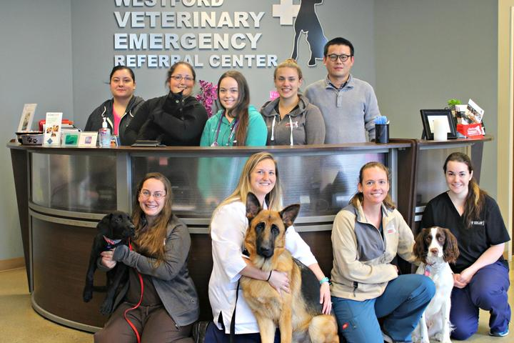 Pet Friendly Westford Veterinary Emergency Referral Center