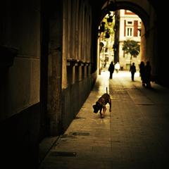 Dog wandering around in Barcelona