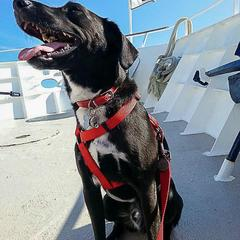 Dog Sits on a Boat
