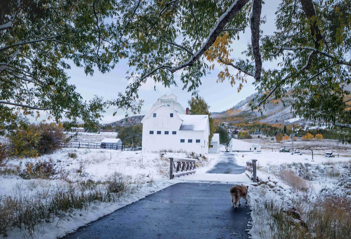 Dog Walks a Path in the Snow