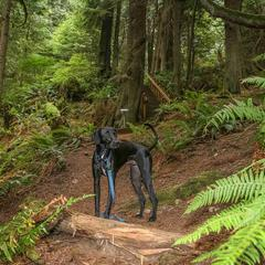 Ace Explores the Woods