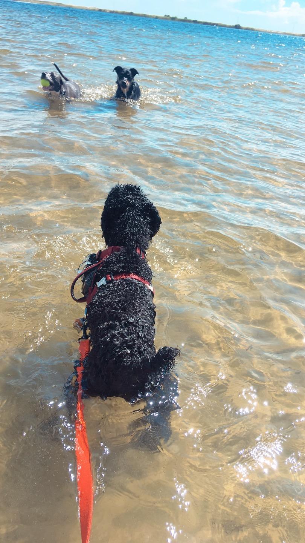 Dog Friendly Fort Walton Beach, Fl - Bring Fido-8673