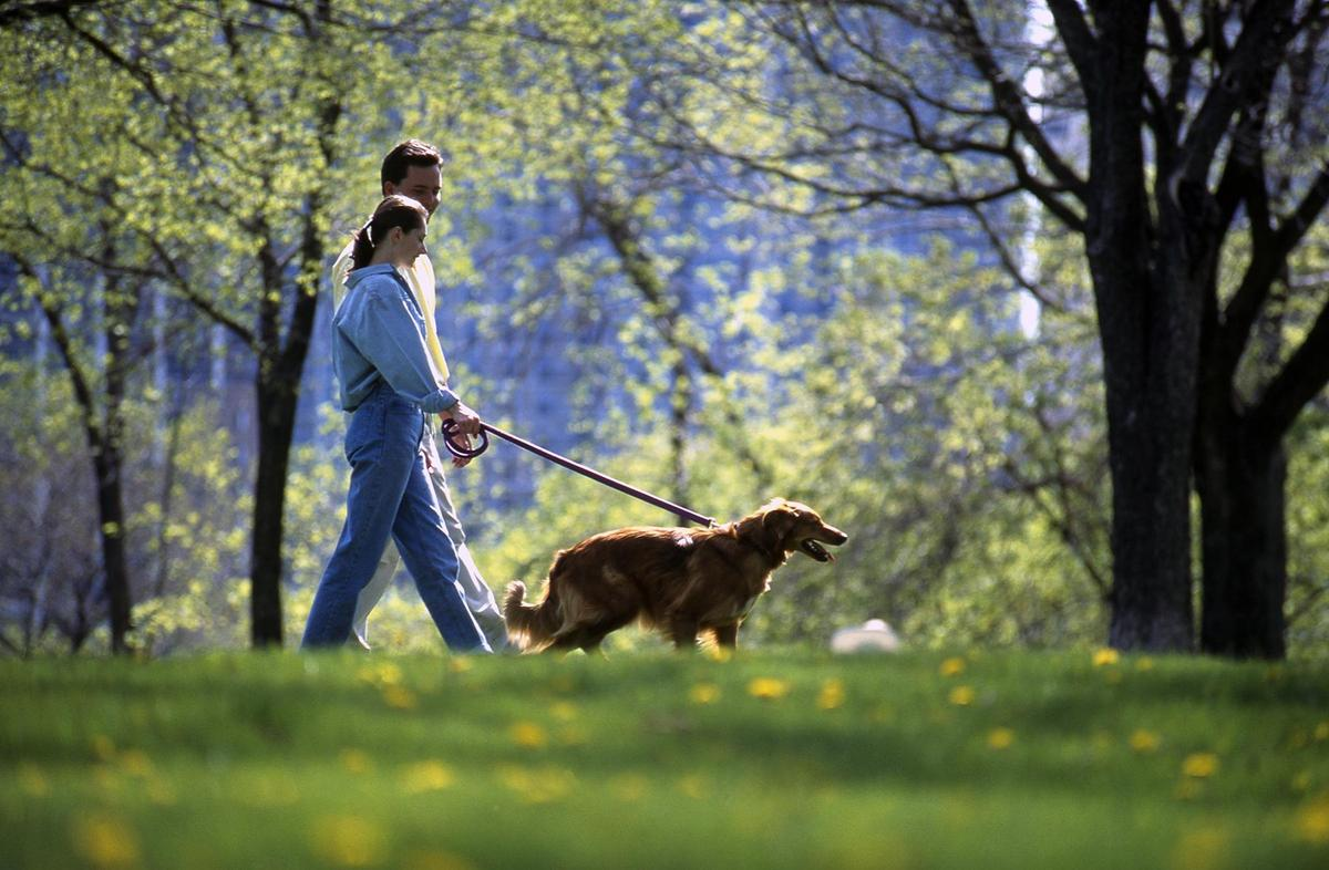Man and Woman Walk a Dog