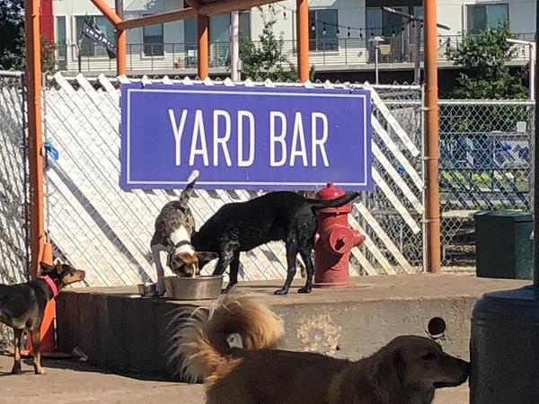 Yard Bar Fun
