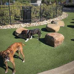 Elvi's First Dog Park Experience