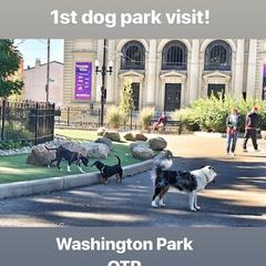 4.5 Month Old Elvi's 1st Dog Park Experience
