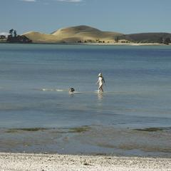 Woman and Dog Walk through Water