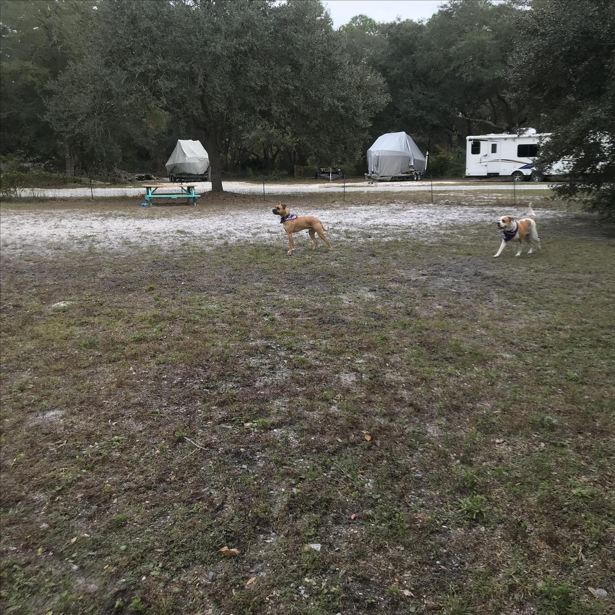Fenced in Dog Run