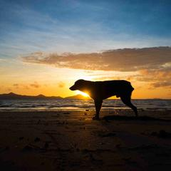 Silhouette of a dog on the beach at sunset