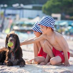Two young boys play with a dog on a beach