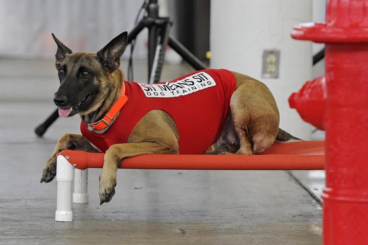 Pet Friendly Sit Means Sit Dog Training Orange County Coastal