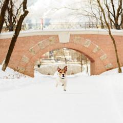 Dog Runs Through a Brick Archway in Snow