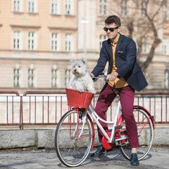 Man Rides a Bike with a Westie
