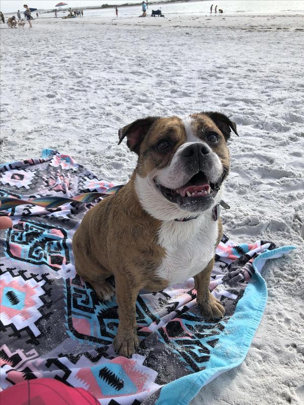 Roxys Favorite Dog Beach!