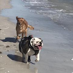 Clarabelle In The Beach