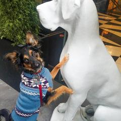 Bandit and his new Friend at Hotel Monaco