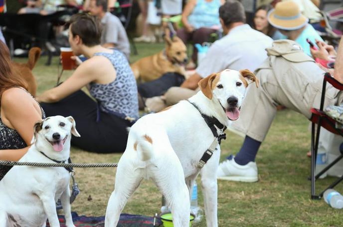 Bow Wow Film Festival is a dog event that  celebrates Fido through cinema.