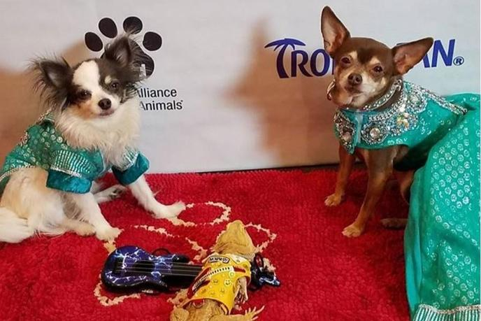 The NYC Pet Fashion Show is a glamorous dog event for a good cause.