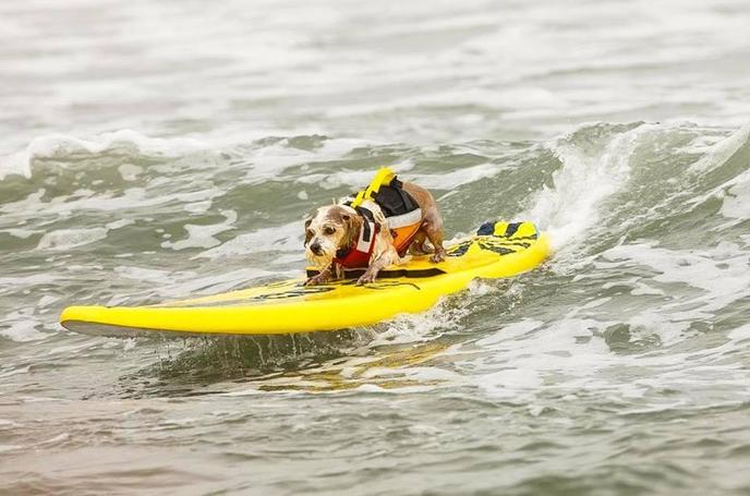 Dogs who love the water won't want to miss this dog event!