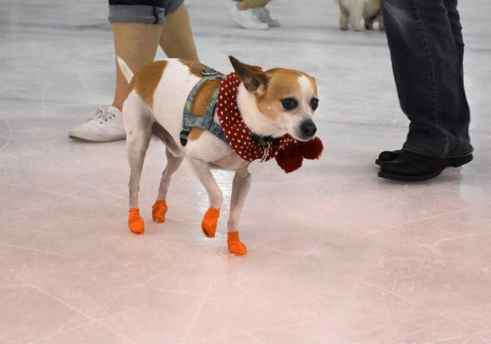 Keep Fido on ice at this unique dog event in Daytona.