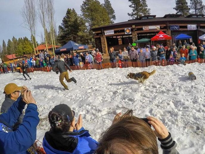 The K9 Keg Pull is a dog event that tests your dog's stamina and your love of beer!