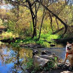 Hiro Sits by a Stream