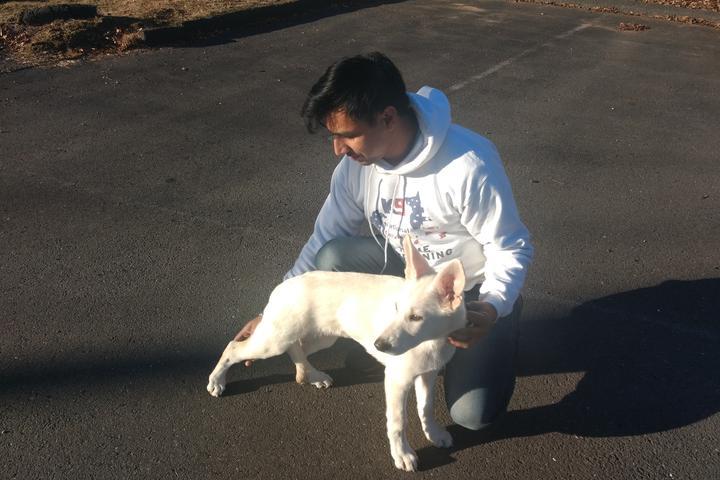 Pet Friendly K9 National Services