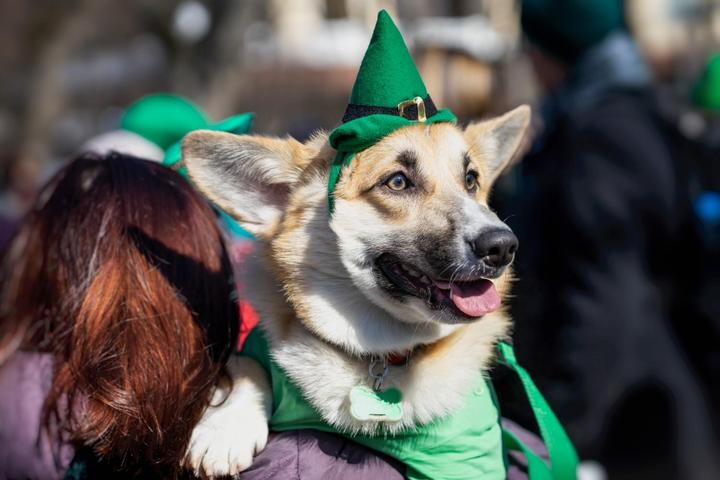 A Pet-Friendly Review of 8 World-Famous St. Patrick's Day Parades