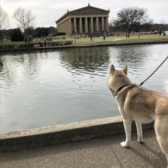 Pup & Parthenon