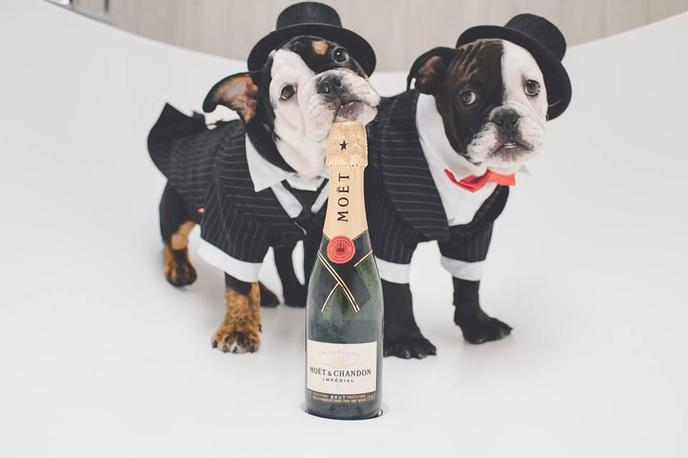 Meet two furry reasons to stay at the London West Hollywood, a chic pet-friendly hotel.