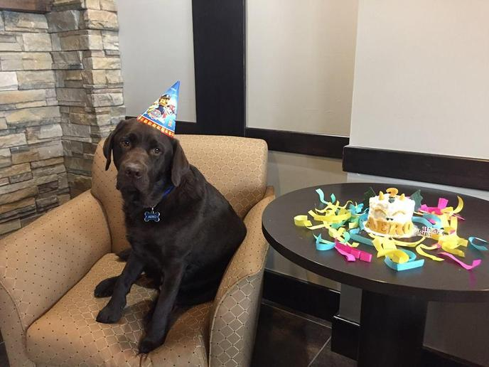 This pet-friendly Best Western has one employee who will go the extra paw for you.