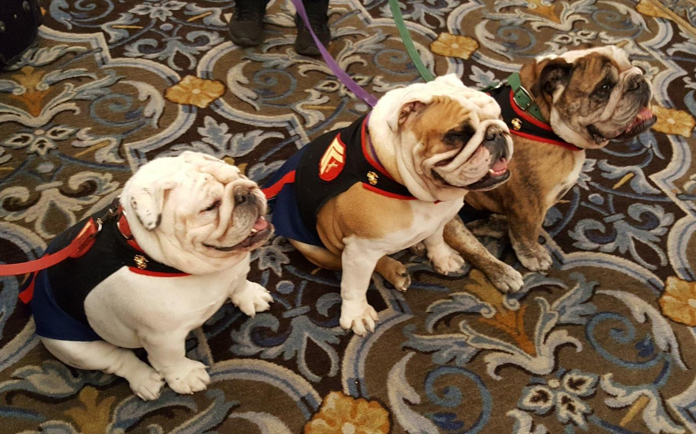 This pet-friendly hotel in San Francisco will have you feeling Bull-ish about your stay!