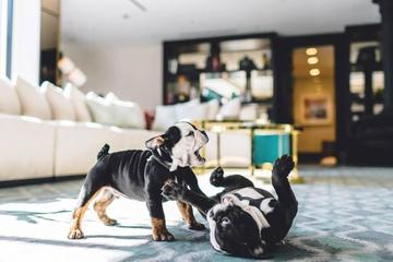Meet the mascots of the pet-friendly London West Hollywood hotel in LA.