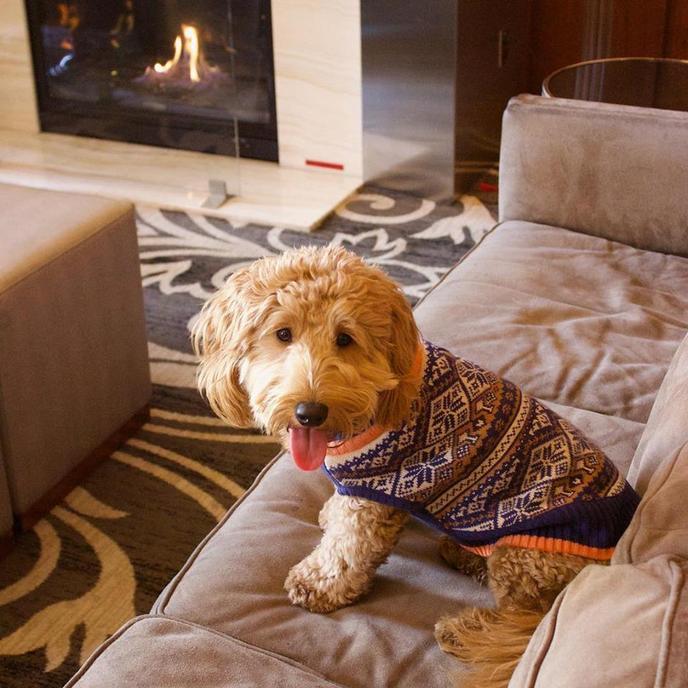 Millie is a highlight of the The dog-friendly Hilton Milwaukee City Center.