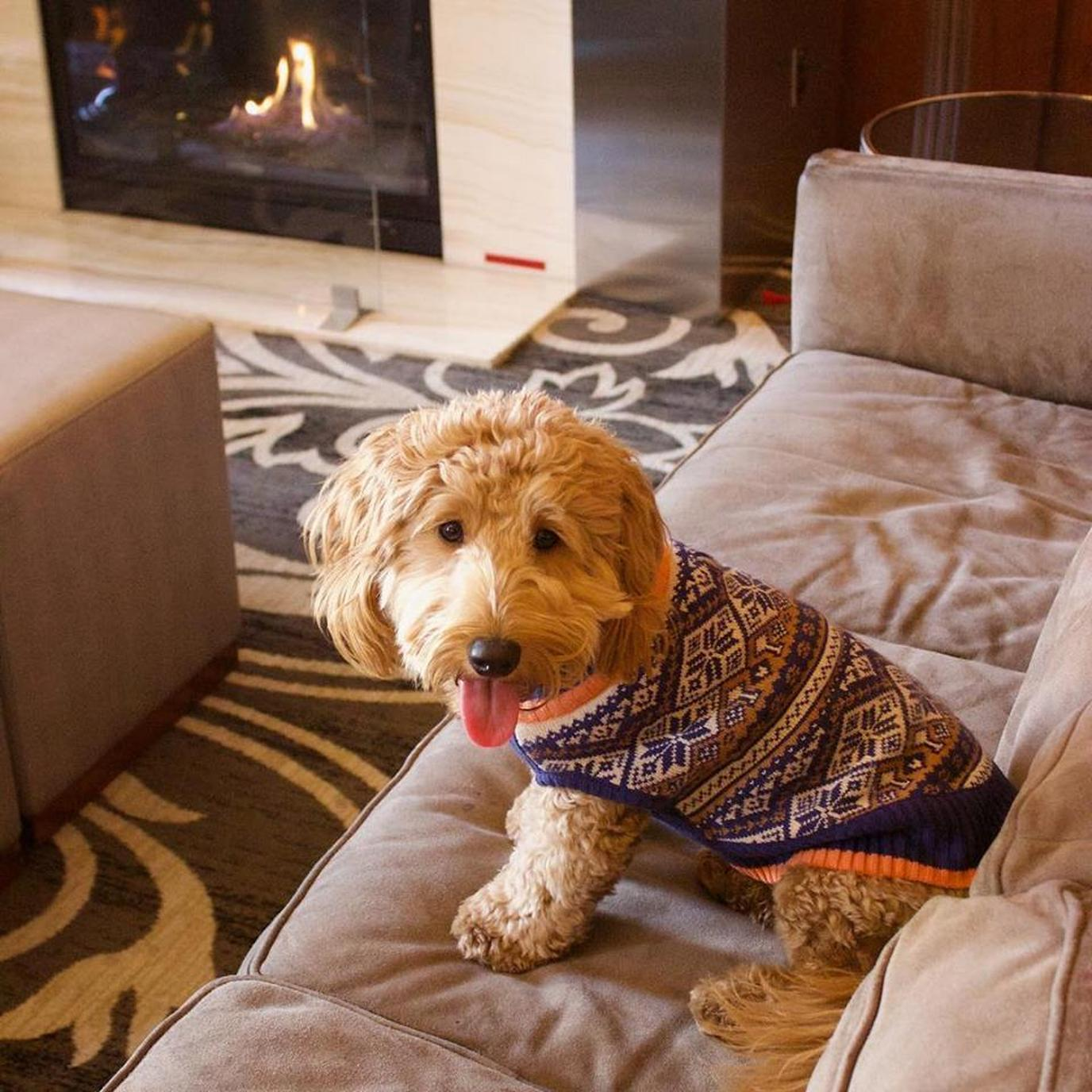 Millie is a highlight of the The dog-friendly Hilton Milwaukee City Center.