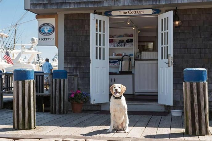 The Cottages at Nantucket Boat Basin offer pet-friendly rooms and complimentary tail wags.